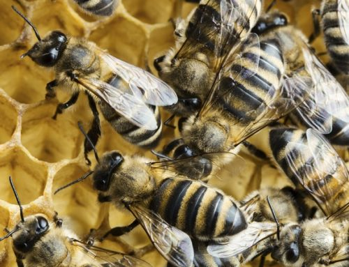 """Five Principles for Leading the """"Swarm"""""""
